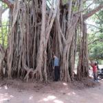 Jour 10 - Lion Rock à Sigiriya 1