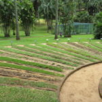Jour 13 - Jardin botanique de Peradeniya 7