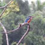Jour 21 - Safari boat à Maduganga 1