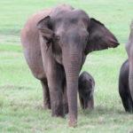 Jour 7 - Réserve aux éléphants 3