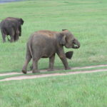Jour 7 - Réserve aux éléphants 5
