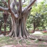 Jour 8 - sur le site de Polonnaruwa 7