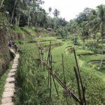Jour 13 - rizières de Tegalalang 4
