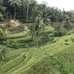 Jour 13 - rizières de Tegalalang 6