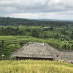Jour 14 - rizières de Jatiluwih 8