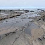 Jour 15 - Kennett River sur la plage 2