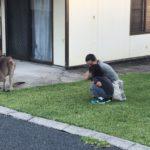Jour 4 - Premiers kangourous 4