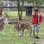 Jour 8 - Potoroo Palace 3 (kangourou)