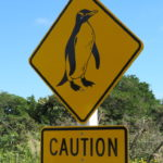 Jour 11 - Greymouth camping sauvage 2 (pingouin)