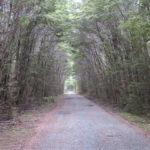 Jour 6 - Big Totara Walk 1
