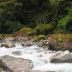 Jour 7 - Fiordland 16 - Fall
