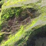 Jour 7 - Fiordland 38 - Milford Sound