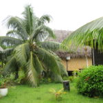 Jour 13 - Tahaa cocotier et toit en pandanus