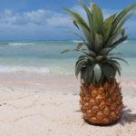 Jour 15 - Tikehau ananas de Moorea