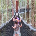 Jour 18 - Redwood Walk 3