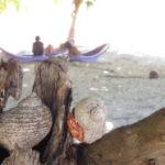 Jour 19 - Tikehau la plage 2 (bernard-l