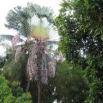 Jour 22 - Tahiti arbre