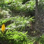 Jour 3 - Balade dans le Noosa National Park 3 (araignée)