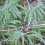 Jour 3 - Balade dans le Noosa National Park 5 (araignée)