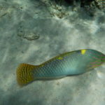 Jour 6 - Moorea snorkeling au jardin de corail 5