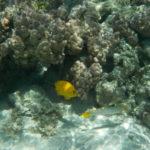 Jour 6 - Moorea snorkeling au jardin de corail 6