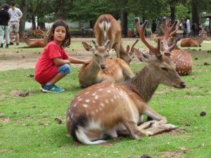 Jour 29 - Nara parc 2