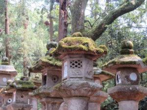 Jour 30 - Nara sanctuaire shinto Kasuga Taisha 2