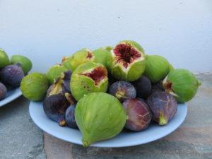 Jour 4 - Cueillette de figues de Vathi 1
