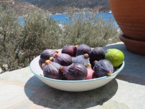 Jour 1 - Première cueillette de figues